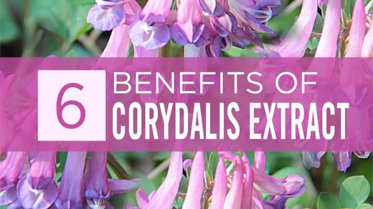Corydalis Extract